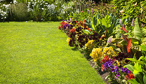 Lawn Maintenance | A+ Landscaping | Las Cruces, NM | (575) 526-7962