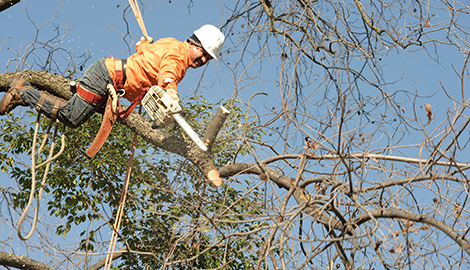 Tree Service | A+ Landscaping | Las Cruces, NM | (575) 526-7962